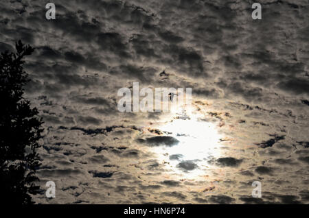 Bird flying against beautiful sky with Cirrocumulus clouds and sun - Stock Photo