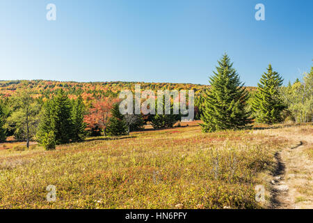 Dolly sods meadow and trail path during autumn in West Virginia - Stock Photo