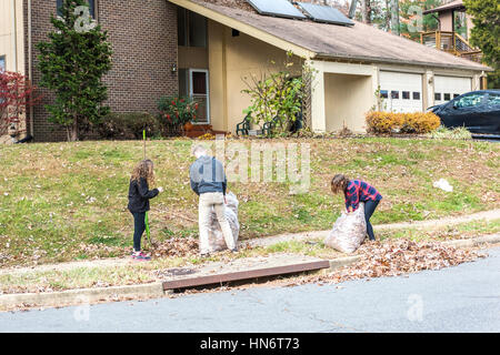 Fairfax, USA - November 24, 2016: Three young people gathering fallen leaves in bags during autumn in neighborhood - Stock Photo