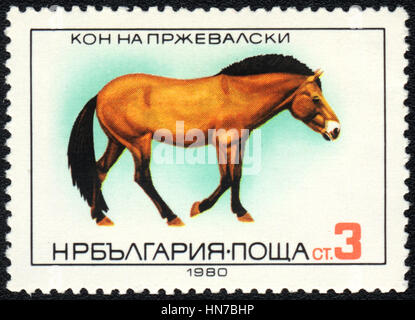 A postage stamp printed in Bulgaria shows  a  Przewalski horse(Equus ferus przewalskii), horse breed  series , circa - Stock Photo