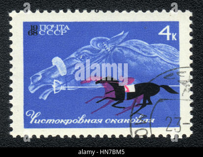 A postage stamp printed in USSR shows  a Thoroughbred race horse, series horse breed in a equestrian sport, circa - Stock Photo