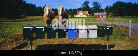 Swedish farmhouse with horses outside. Sweden - Stock Photo