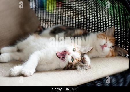 Sleep and sleepy kitten - Stock Photo
