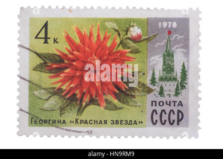 USSR - CIRCA 1978: A Postage Stamp Shows Dahlia Red Star,   - Stock Photo