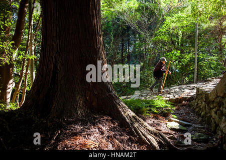 Pilgrim in Daimon-zaka Slope, access at Kumano Nachi Taisha Grand Shire, Kumano Kodo, Nakahechi route, Wakayama, - Stock Photo