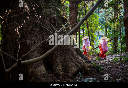 Pilgrims in Heian period costumes, in Daimon-zaka Slope, access at Kumano Nachi Taisha Grand Shire, Kumano Kodo,Nakahechi - Stock Photo