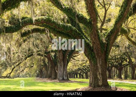 Boone Hall Plantation In Charleston Sc Stock Photo