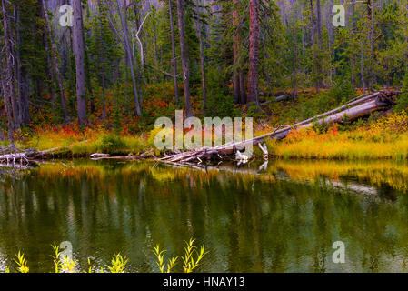Emerald Lake - Stock Photo