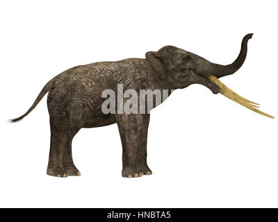 Stegotetrabelodon was an elephant that lived in the Miocene and Pliocene Periods of Africa and Eurasia. - Stock Photo
