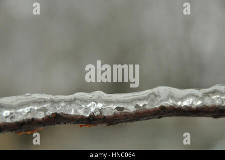 Ice covering branch after freezing rain storm (Brampton, ON) - Stock Photo