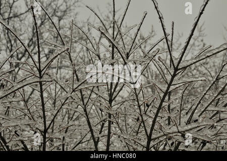 Ice covering tree branches after freezing rain storm (Brampton, ON) - Stock Photo