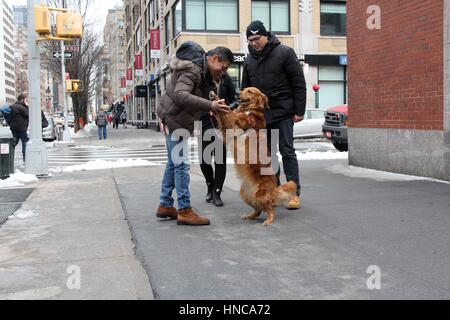 New York, Us. 11th Feb, 2017. Adorable dog offers strangers hugs, New York, USA Credit: G. Ronald Lopez/Alamy Live - Stock Photo