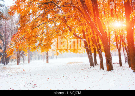 Sunlight breaks through the autumn leaves of the trees in the ea - Stock Photo
