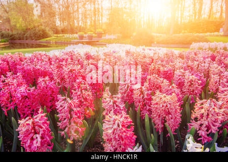 Flower flowerbeds in the park. - Stock Photo