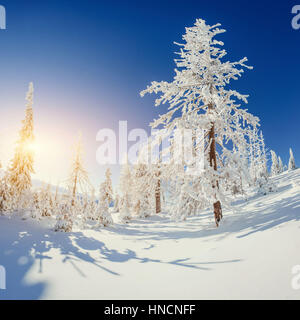 The sun's rays make their way through the snow-covered spruce in - Stock Photo