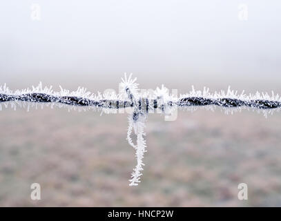 Close Up View of barbwire covered in frost, Bavaria, Germany - Stock Photo