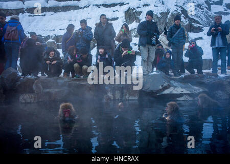 Tourists, Monkeys in a natural onsen (hot spring), located in Jigokudani Monkey Park, Nagono prefecture,Japan. - Stock Photo