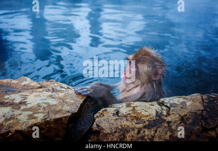 Monkey in a natural onsen (hot spring), located in Jigokudani Monkey Park, Nagono prefecture,Japan. - Stock Photo