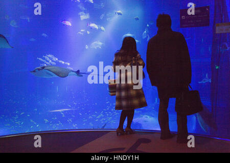 Osaka Aquarium Kaiyukan,visitors looking the massive tank,Bay area,Osaka, Japan,Asia - Stock Photo