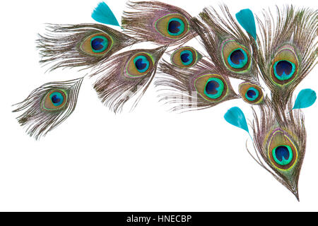 Peacock feathers on the white background - Stock Photo