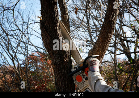                         Save  Download Preview     Trimming tree with electric saw - environmental labor-hand of - Stock Photo