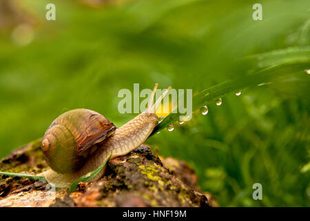 Snail on grass - Stock Photo