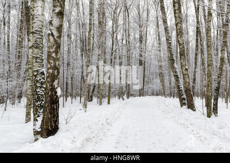 Snowy winter forest. - Stock Photo