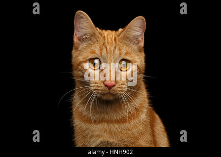Ginger cat on Isolated Black background - Stock Photo