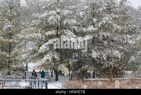 People admiring snow on evergreen trees - Stock Photo