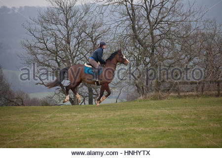 Blackdown Hills, East Devon, UK. 14th February 2017. Horse and rider enjoying a canter on an overcast and misty - Stock Photo