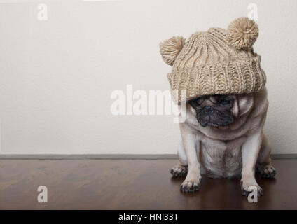 cute little pitiful sad pug puppy dog, sitting down on wooden floor - Stock Photo