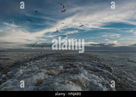 Seagulls flying over sea against sky - Stock Photo