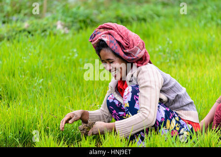 TETEBATU, INDONESIA - SEPTEMBER 10, 2014: Indonesian farmer planting rice saplings - Stock Photo