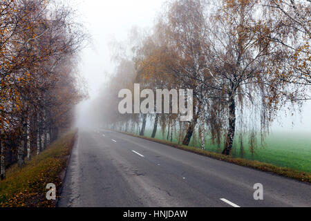 old asphalt road in the autumn, during heavy fog. on the roadway visible white markings. On the side of bare birch - Stock Photo