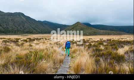 Hiker on trail through swampland, Pouakai Circuit, Egmont National Park, Taranaki, North Island, New Zealand - Stock Photo