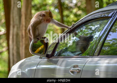 Monkey sitting on side-view mirror of a car, Sihanoukville, Cambodia - Stock Photo