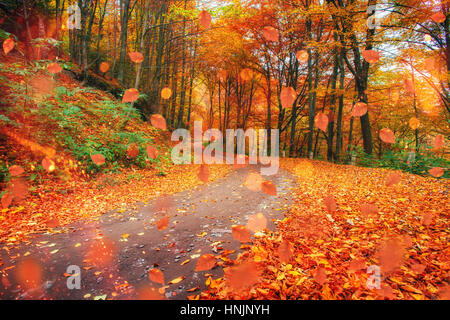 Sunlight breaks through the autumn leaves of trees - Stock Photo