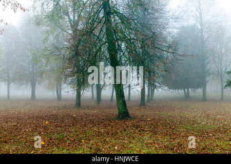 the trees growing in the park in autumn season in a small fog. The foliage of a maple fallen to the ground and the - Stock Photo
