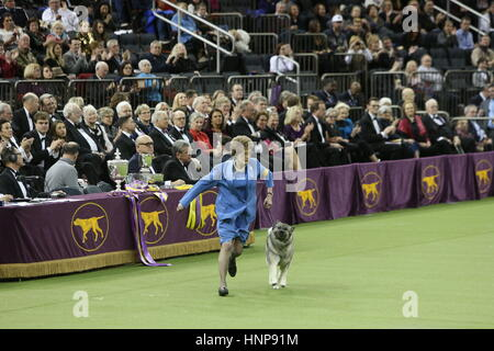 New York City, USA. 15th Feb, 2017. The 141st Westminster Kennel Club's annual Best In Show competition concluded - Stock Photo