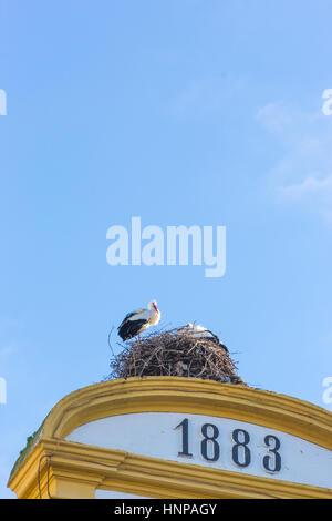 Merida, Badajoz Province, Extremadura, Spain. White storks ( Ciconia Ciguena) on their nest atop the Town Hall. - Stock Photo