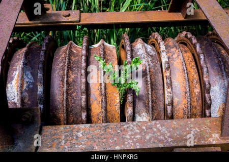 Old roller with grass and a thistle in the middle - Stock Photo