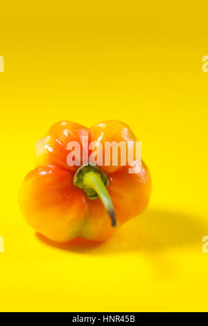 yellow mini hot pepper on yellow background - Stock Photo