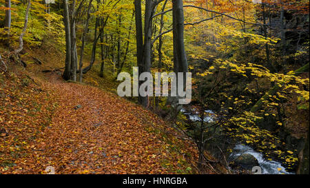 Forest path winding along the river though the forest in autumnal colors. - Stock Photo