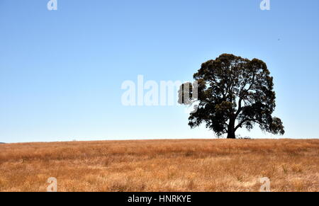 Single Tree Standing Alone on the field. - Stock Photo
