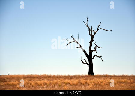 Single dried Tree Standing Alone with dry golden grass on the field. - Stock Photo