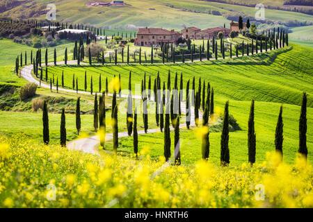 Asciano, cypress trees and rolling hills. Crete Senesi, Tuscany, Italy - Stock Photo