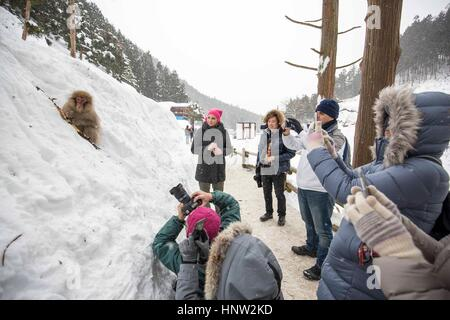 Japan . Snow monkeys at Jigokudani Monkey Park is in Yamanouchi, Shimotakai District, Nagano Prefecture, Japan. - Stock Photo