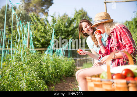 Two young female gardeners eating tomatoes on organic farm - Stock Photo