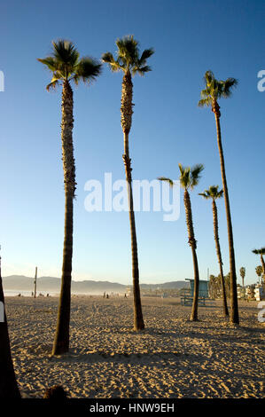 Palm trees in the sand near the pier in Venice Beach, California - Stock Photo
