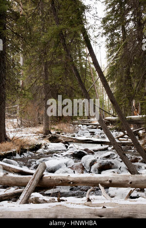 Fallen trees over icy river in Sawtooth National Forest, Idaho - Stock Photo